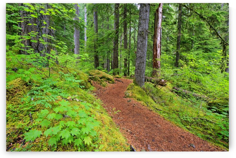 Trail To Proxy Falls In Willamette National Forest; Oregon, United States of America by PacificStock
