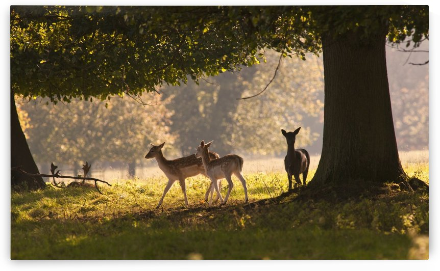 Deer Standing Under A Tree; North Yorkshire, England by PacificStock