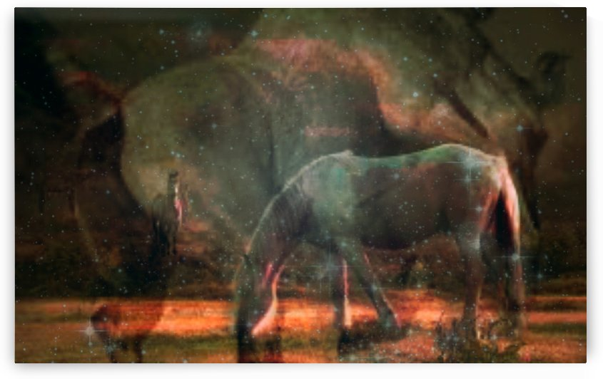 horses by jessica bell