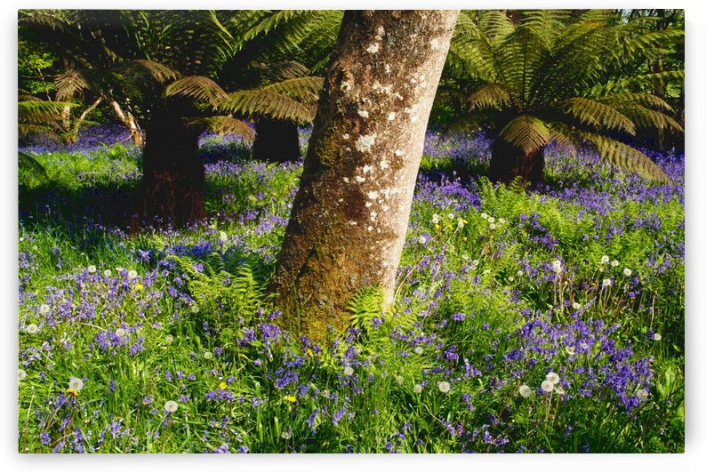 Mount Congreve Gardens; County Waterford, Ireland by PacificStock