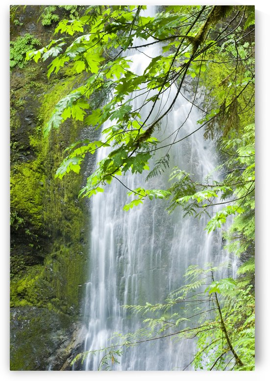 Marymere Falls, Olympic National Park by PacificStock