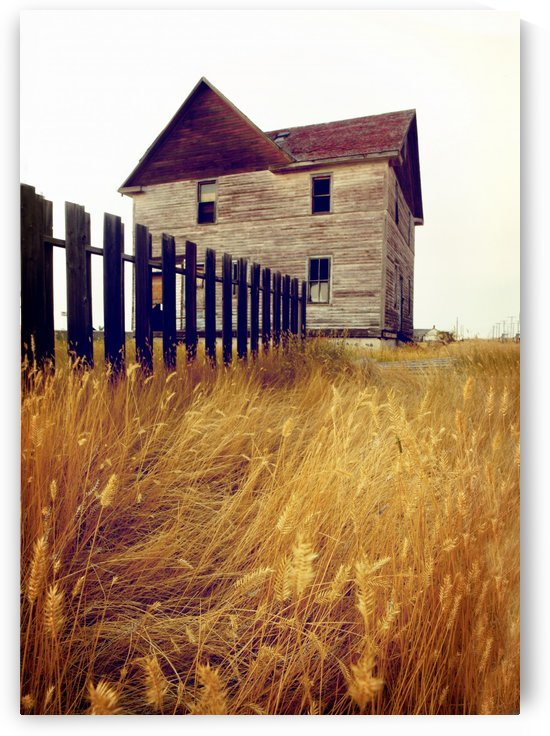 Abandoned House Near Robsart, Saskatchewan, Canada by PacificStock