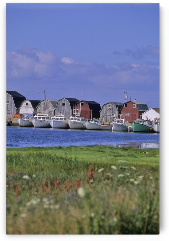 Fishing Shacks Line The Bay At Malpeque Harbour, Pei by PacificStock