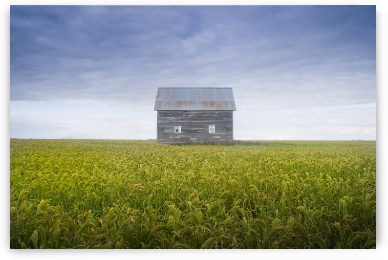 Old House, Manitoba, Canada by PacificStock