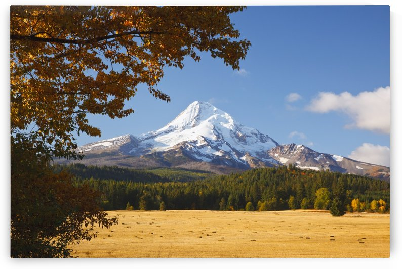 Mount Hood And Autumn Colours In Hood River Valley; Oregon, United States of America by PacificStock