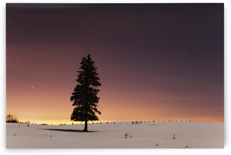 Stars In The Night Sky With Lone Tree; Thunder Bay, Ontario, Canada by PacificStock