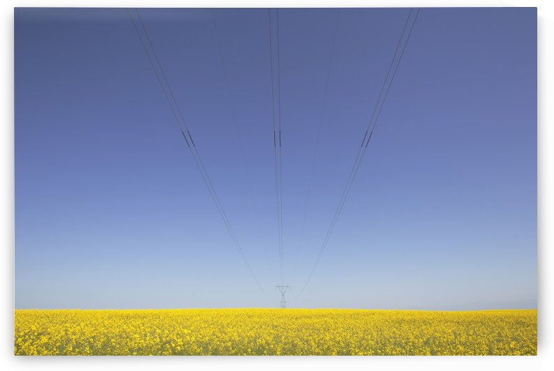 Canola Field And Power Lines, East Of Nanton; Alberta, Canada by PacificStock