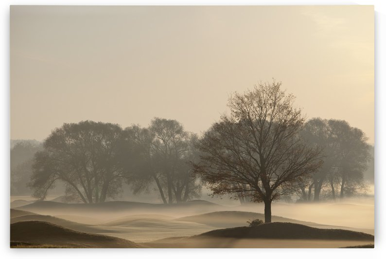 Trees On Golf Course At Sunrise On A Misty Autumn Morning; Caledon, Ontario, Canada by PacificStock