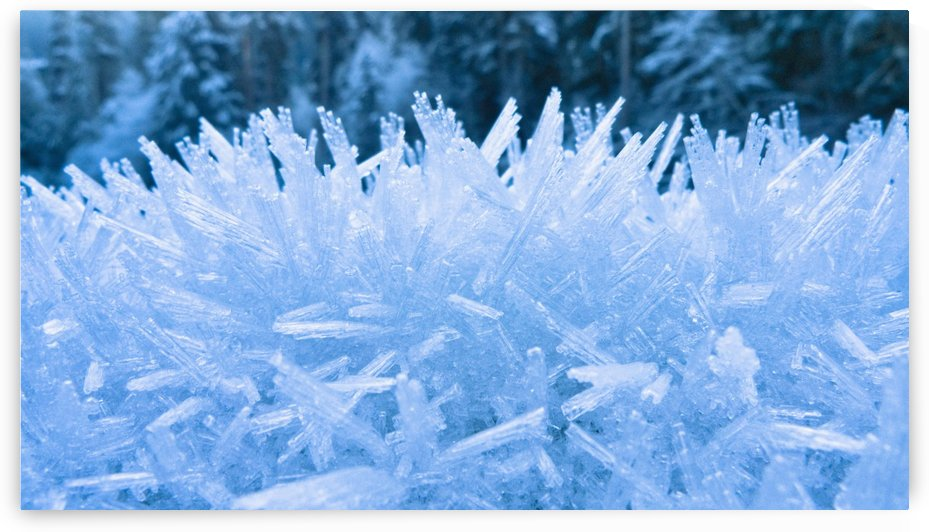 Close Up Of Hoar Frost Along The North Fork Of The Nooksak River During Winter, Mount Baker National Forest, Washington, Usa by PacificStock