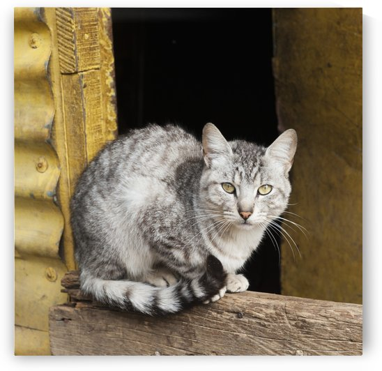 A cat sits on a wooden beam;Guatemala city guatemala by PacificStock