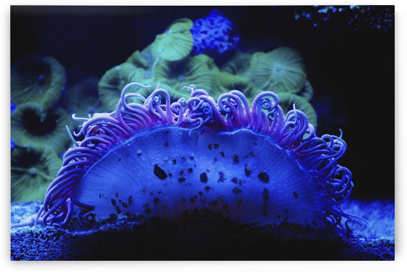 Blue coral underwater;Israel by PacificStock