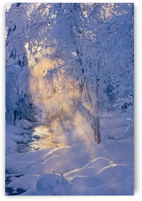 Small stream in a hoar frost covered forest with rays of sun filtering through the fog in the background russian jack springs park;Anchorage alaska united states of america by PacificStock