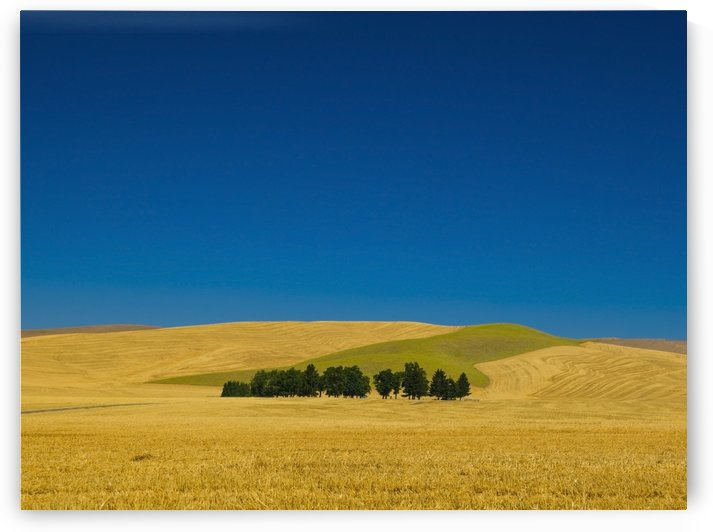 Cemetery with trees in a wheat field;Washington united states of america by PacificStock