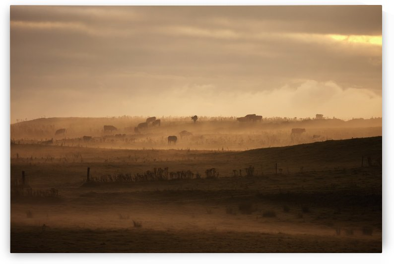 Trees scattered over the hills in the fog at sunset;Dumfries and galloway scotland by PacificStock