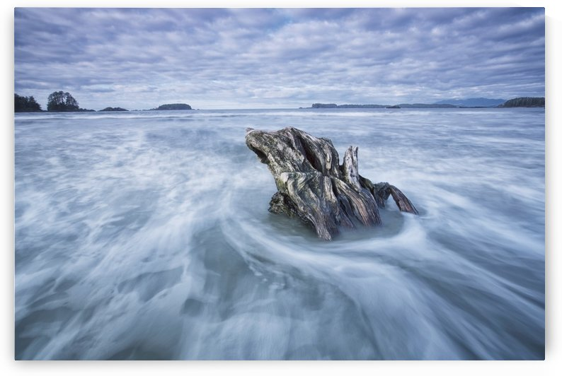 The tide coming in and flowing around a sunken piece of driftwood, chesterman beach;Tofino, vancouver island, british columbia, canada by PacificStock