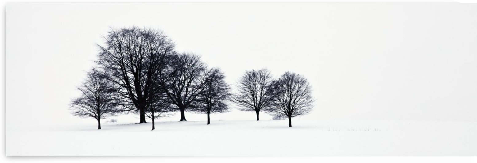 Trees in a snowy field in chatsworth park;Derbyshire, england by PacificStock