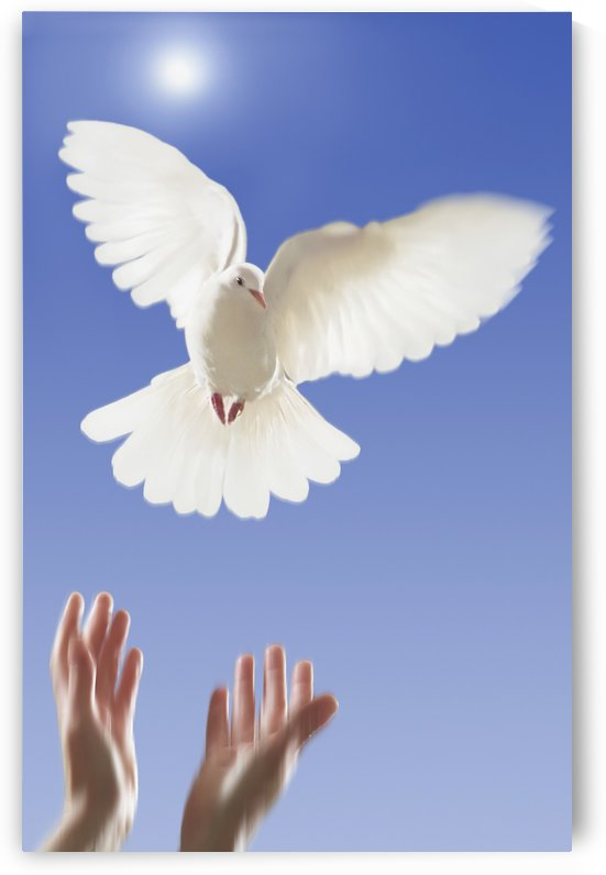 Hands releasing white dove;Vancouver british columbia canada by PacificStock
