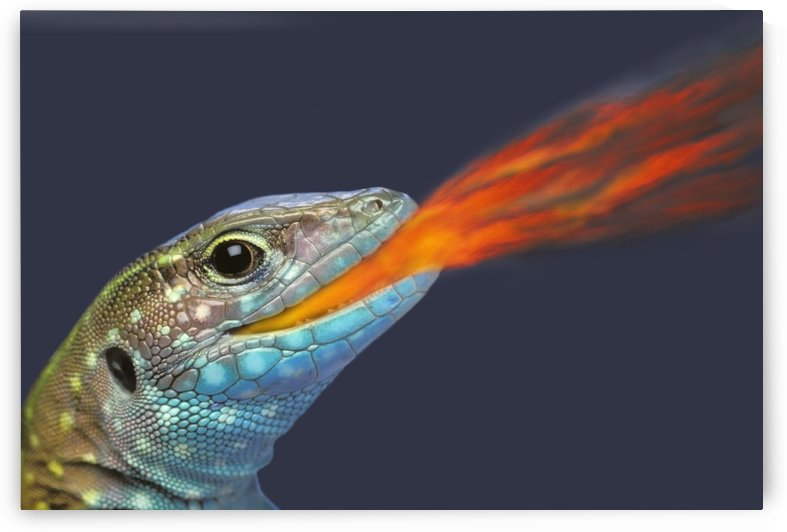 Fire-breathing rainbow lizard;British columbia canada by PacificStock