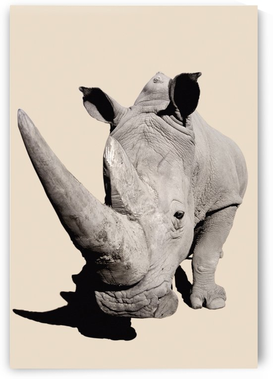 Rhinoceros;Africa by PacificStock