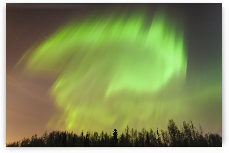 The northern lights above a forest;Anchorage alaska united states of america by PacificStock