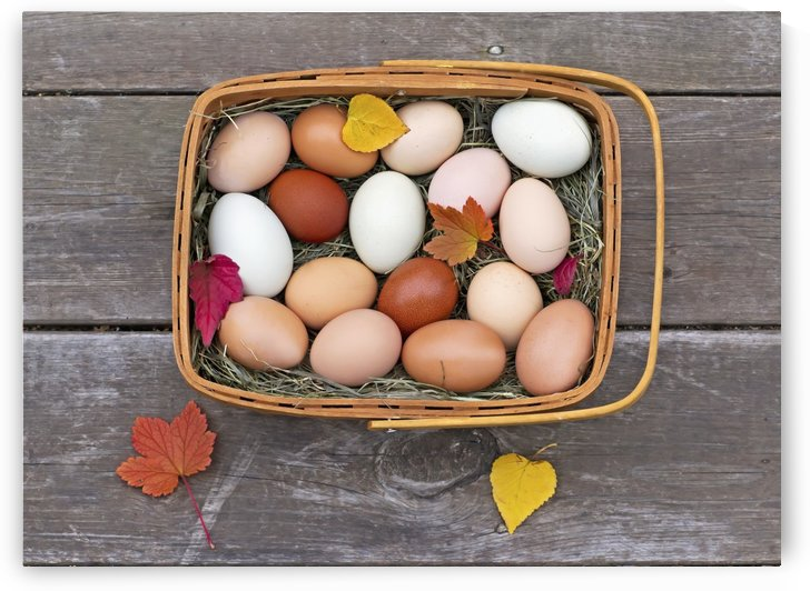 Fresh eggs in a basket on an old porch in autumn;Palmer alaska united states of america by PacificStock