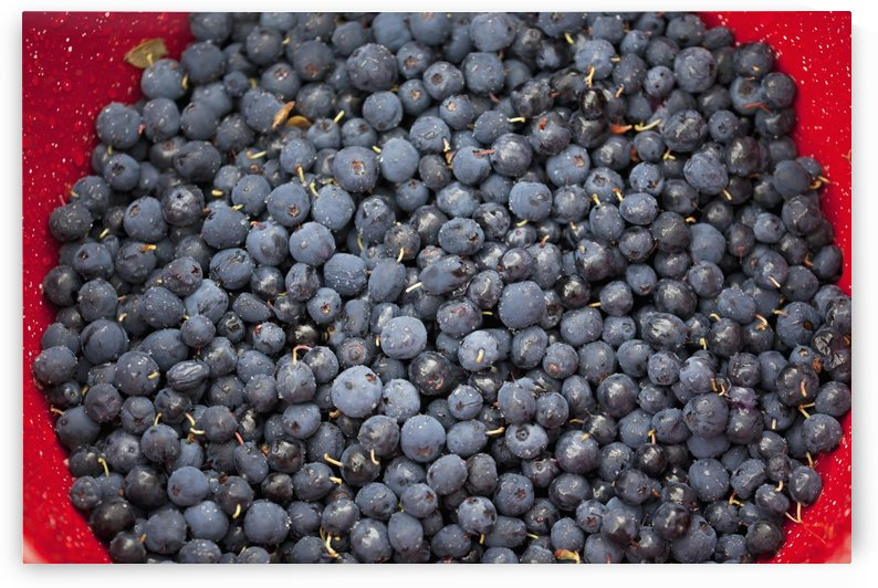 A bowl of blueberries;Alaska united states of america by PacificStock