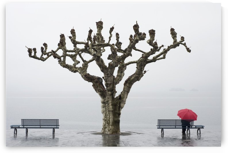 A tree and a person with a red umbrella at the water's edge;Ascona ticino switzerland by PacificStock