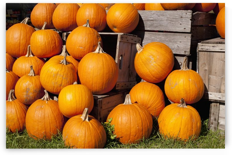 Pumpkins in a pile;Granby quebec canada by PacificStock