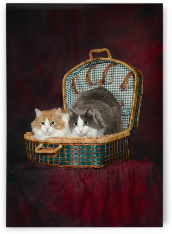 Portrait of two cats in a basket;St. albert alberta canada by PacificStock