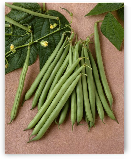 Agriculture - Green beans on stone; Rhapsody variety, studio. by PacificStock