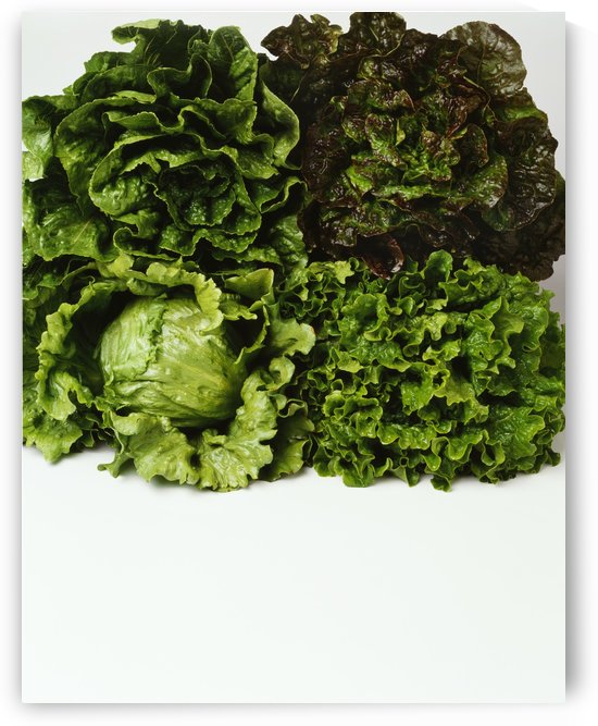 Agriculture - Heads of Romaine, red leaf, Iceberg and green leaf lettuce bunched together on white, studio. by PacificStock