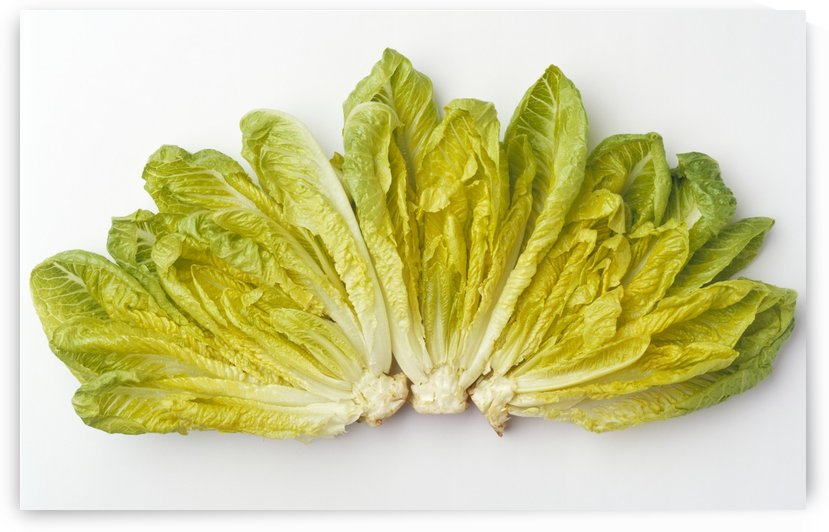 Agriculture - Romaine lettuce hearts fanned out on a white surface, studio. by PacificStock