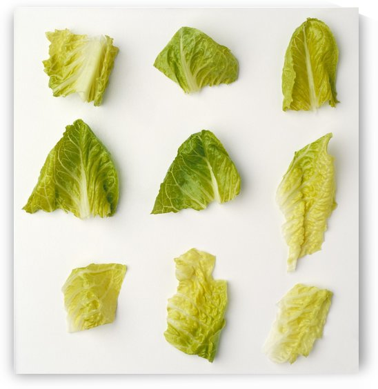 Agriculture - Closeup of chopped Romaine lettuce pieces on a white surface, studio. by PacificStock