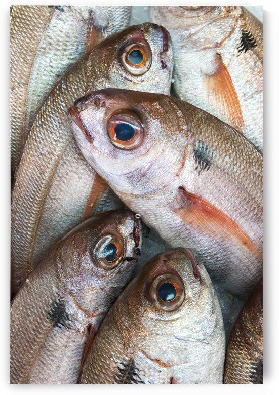 Fresh Caught Fish; Tarifa, Cadiz, Andalusia, Spain by PacificStock