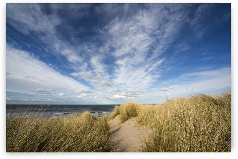 Grasses growing on the sand along the water's edge; Bamburgh, Northumberland, England by PacificStock