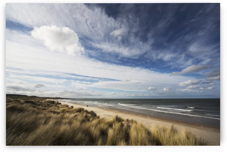 Grass blowing in the wind and sand along the water's edge; Bamburgh, Northumberland, England by PacificStock