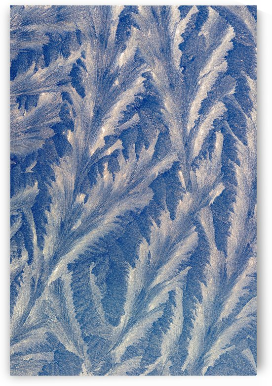 Frost makes patterns on a car window; Astoria, Oregon, United States of America by PacificStock