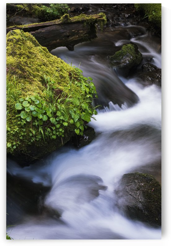 Munson Creek flows through the forest; Tillamook, Oregon, United States of America by PacificStock