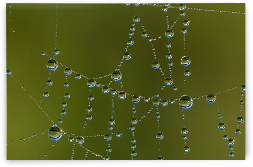 A spider's web catches dew; Astoria, Oregon, United States of America by PacificStock
