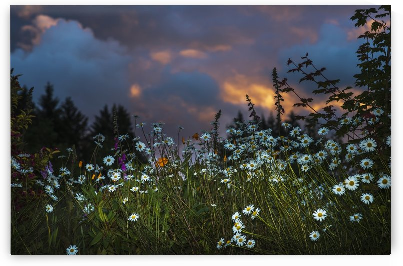 Flowers compliment a sunset sky; Astoria, Oregon, United States of America by PacificStock