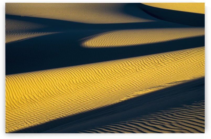 Shadows deepen on a summer evening at Oregon Dunes National Recreation Area; Lakeside, Oregon, United States of America by PacificStock