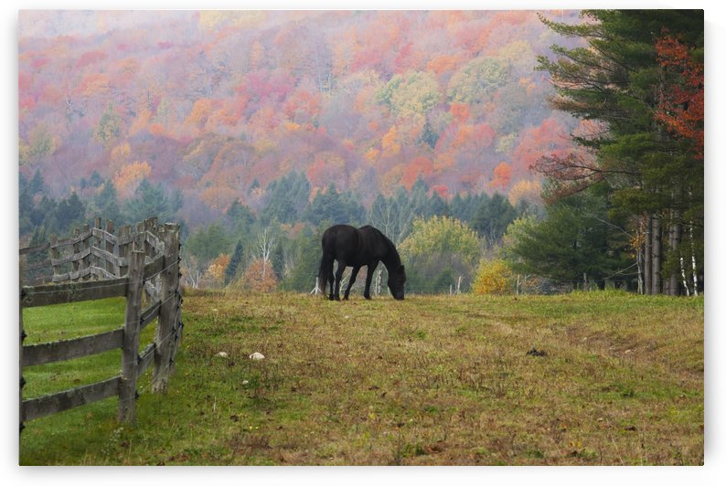 Horse grazing in early morning light and fog in autumn; Iron Hill, Quebec, Canada by PacificStock