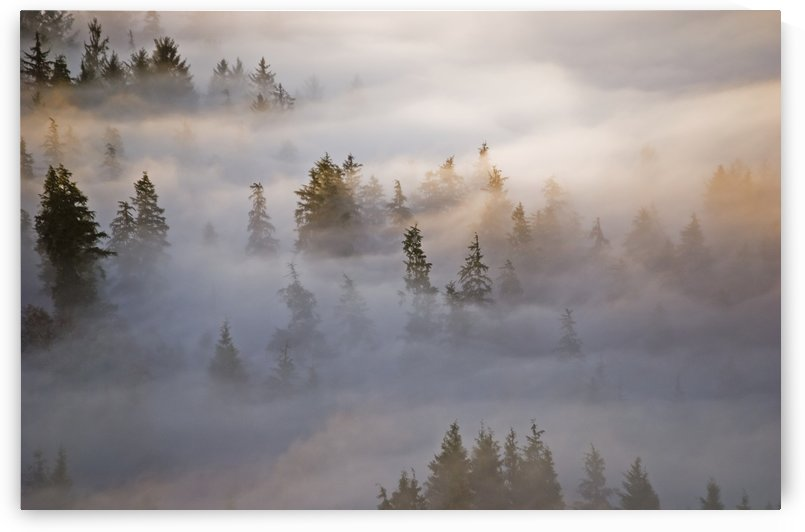 Fog fills the forest; Astoria, Oregon, United States of America by PacificStock