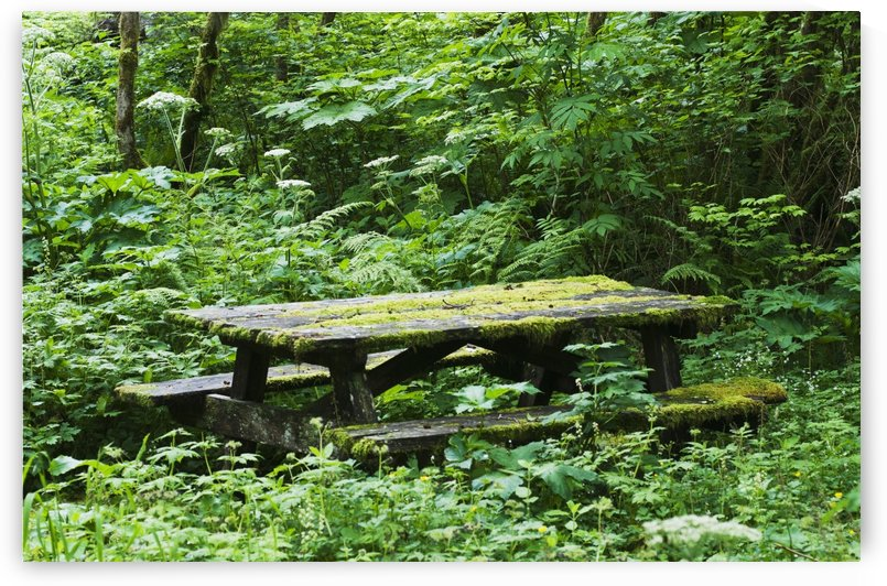 An abandoned picnic table is reclaimed by the forest; Elsie, Oregon, United States of Ameria by PacificStock