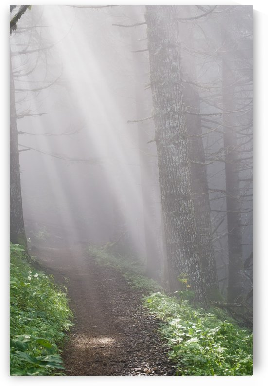 Sunbeams through the foggy forest onto a hiking trail on Saddle Mountain; Elsie, Oregon, United States of America by PacificStock