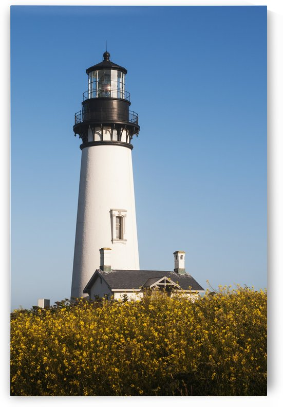 Mustards blooms near the Yaquina Head Lighthouse; Newport, Oregon, United States of America by PacificStock