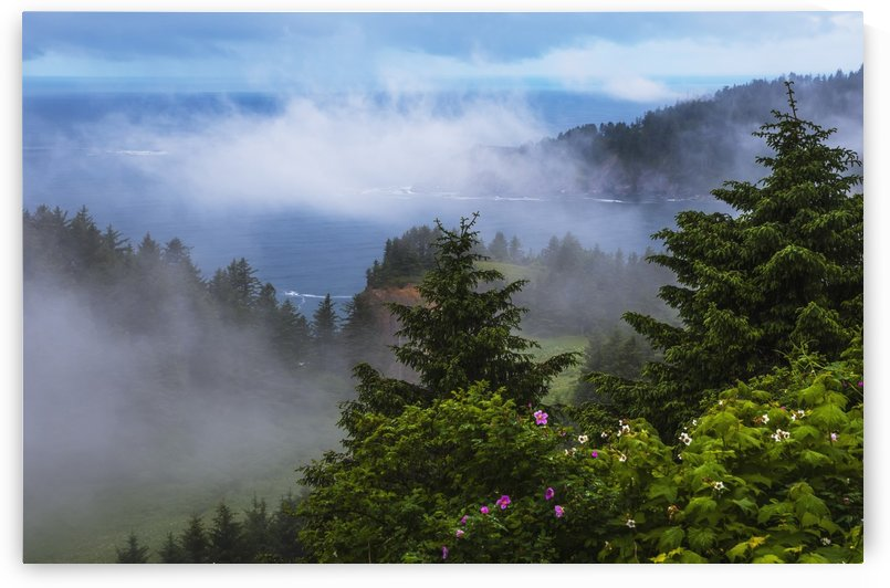 A veil of mist softens the view of the coastline and Oswald West State Park; Manzanita, Oregon, United States of America by PacificStock