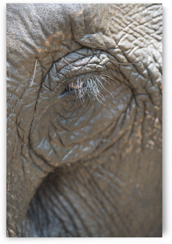 Elephant eye; Chiang Mai, Thailand by PacificStock