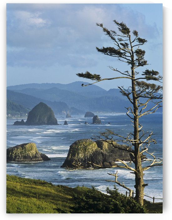 Haystack Rock viewed from Ecola Point; Cannon Beach, Oregon, United States of America by PacificStock