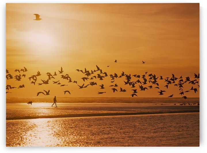 A flock of birds fly over the beach and ocean as the sun sets at Siltcoos Beach; Florence, Oregon, United States of America by PacificStock